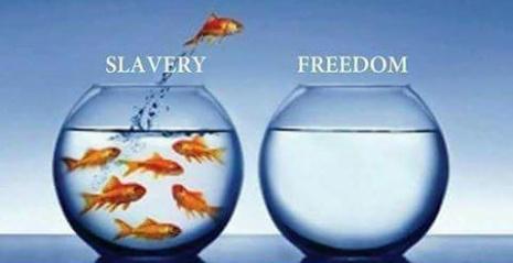 fish freedom.jpg