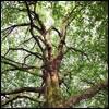 The Human Tree