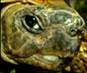 Video of Turtles