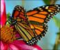 Video of Butterflies