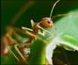 Video of Ants