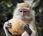 Video of Apes, Monkeys & Lemurs