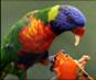 Video of Parrots