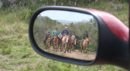 """""""זהירות, סוסים מאחוריך"""""""