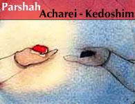 Torah Portion: Acharei-Kedoshim