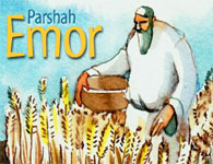 Torah Portion: Emor