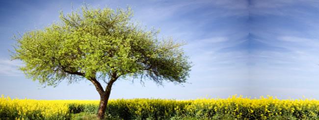 Еврейские праздники: Ту-Бишват