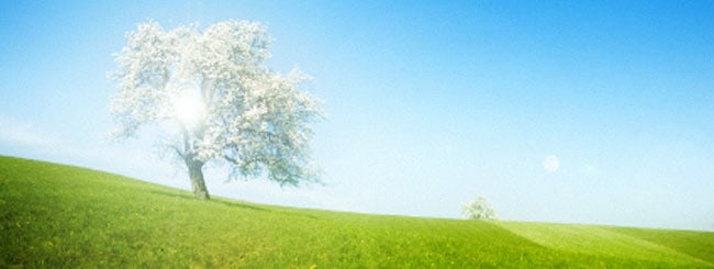 Choftim: Des arbres: grands et petits