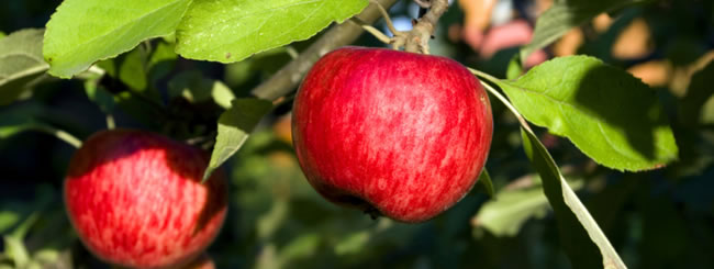 Gedanken: Die Früchte des Erfolgs