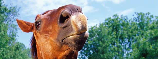 Еврейские праздники: От купца до лошади