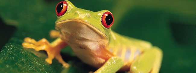 What the Rebbe Taught Me: A Frog's Sermon