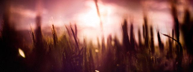 Jewish Holidays: Grain, Growth and Goodness
