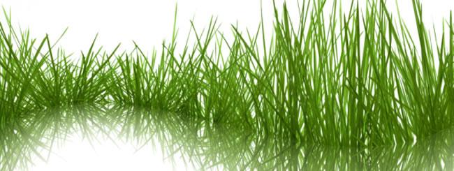 Gedanken: Das grünste Gras