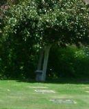 Jewish Burial/Cemetery