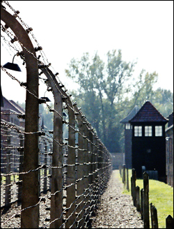 Auschwitz (Photo: Damian Searles)