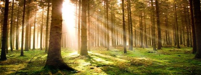 חגים: לדוד ה' אורי וישעי... היער החשוך והמפחיד
