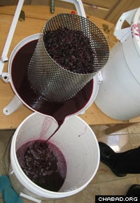 Pressed grapes proceed down the line from fruit to Cuvee Chabad.