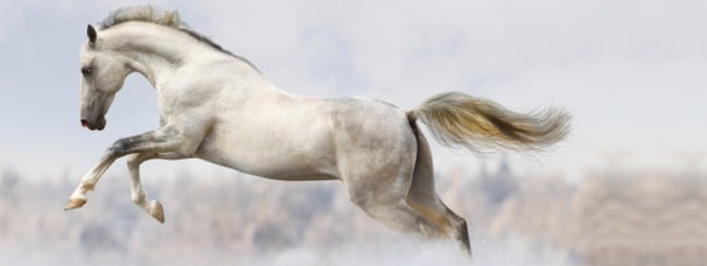 Sages & Mystics: The Wonder Horse