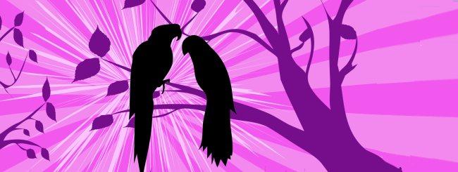 Balak: Deux oiseaux du paradis