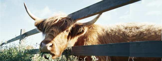 Пятое измерение: Страшный секрет животноводства
