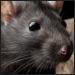 ¿Está permitido experimentar con animales según el judaísmo?
