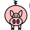 Pigs & Judaism