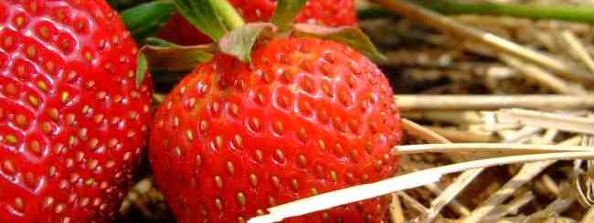 Кашрут: Как правильно есть ягоды и фрукты?