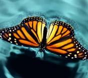 O Oásis da Transformação