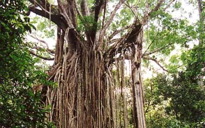 Pics For Different Kinds Of Trees With Names
