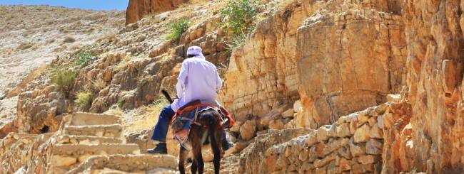 Torah for Now: Of Donkeys and Discernment