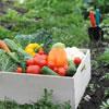 Vegetarianismo dal punto di vista ebraico