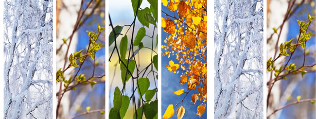 Craft it Jewish: Tree Collage