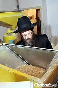 Months later, Rabbi Ashkenazi's son and successor as chief rabbi of Kfar Chabad, Rabbi Meir Ashkenazi, inspects the kernels as they're milled into flour. (Photo: DJC.com.ua)