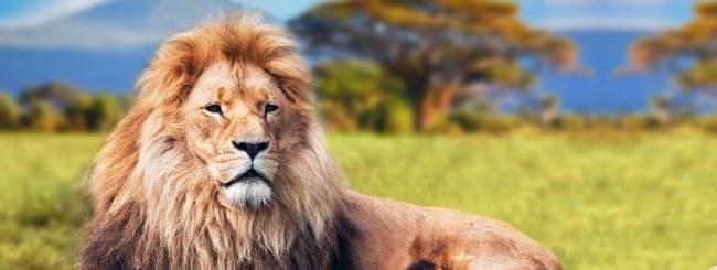 Likute Sichot: Balak - Löwe und Löwin