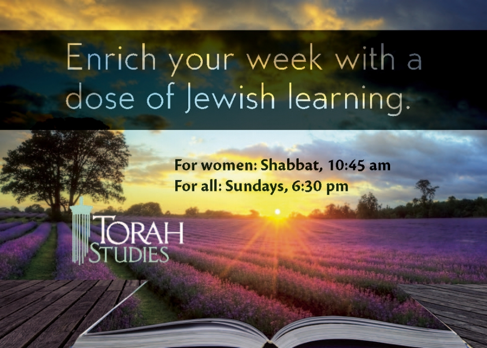 torah studies business card ad 5777.jpg