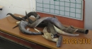 Rosh HaShana 5777 shofarot exibition