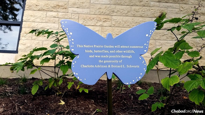 A butterfly garden composed of plants native to the U.S. Midwest has been started at the Chabad of Wilmette-Center for Jewish Life and Learning in Illinois. It will serve as a teaching tool for children, a boon to the environment and a draw for beneficial insects.