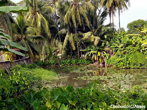 The Chabad House is encompassed by an idyllic garden complete with a pond.