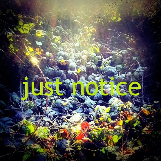 Notice1.jpg
