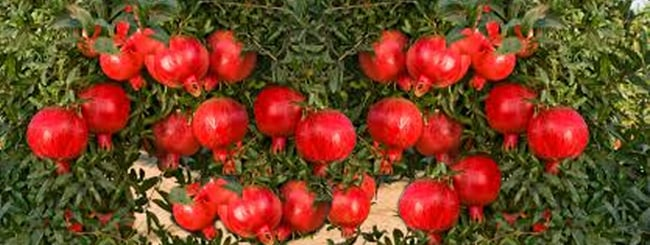 Tu b'Shevat Holiday: Manna and Fruits of Israel