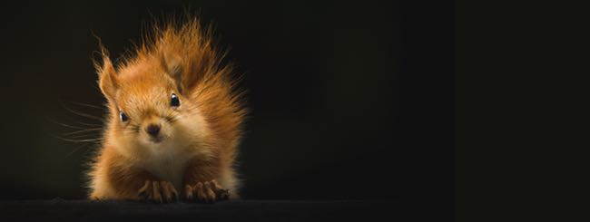 The Superhero Files: Superhero Episode V: Meditation on a Squirrel