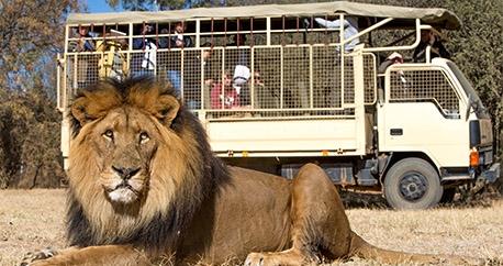 Lanseria-Lion-and-Safari-Park-Team-Building.jpg
