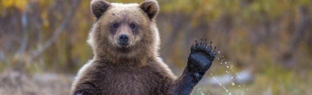 Bear-banner.jpg