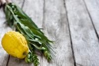 Lulav and Etrog Orders