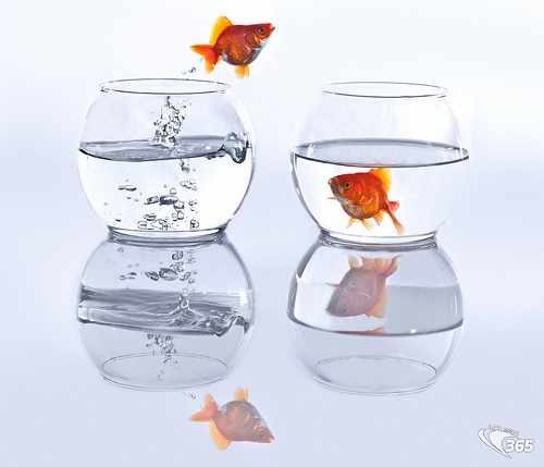 fishbowl jumping.jpg