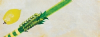 Purchase a Lulav and Etrog