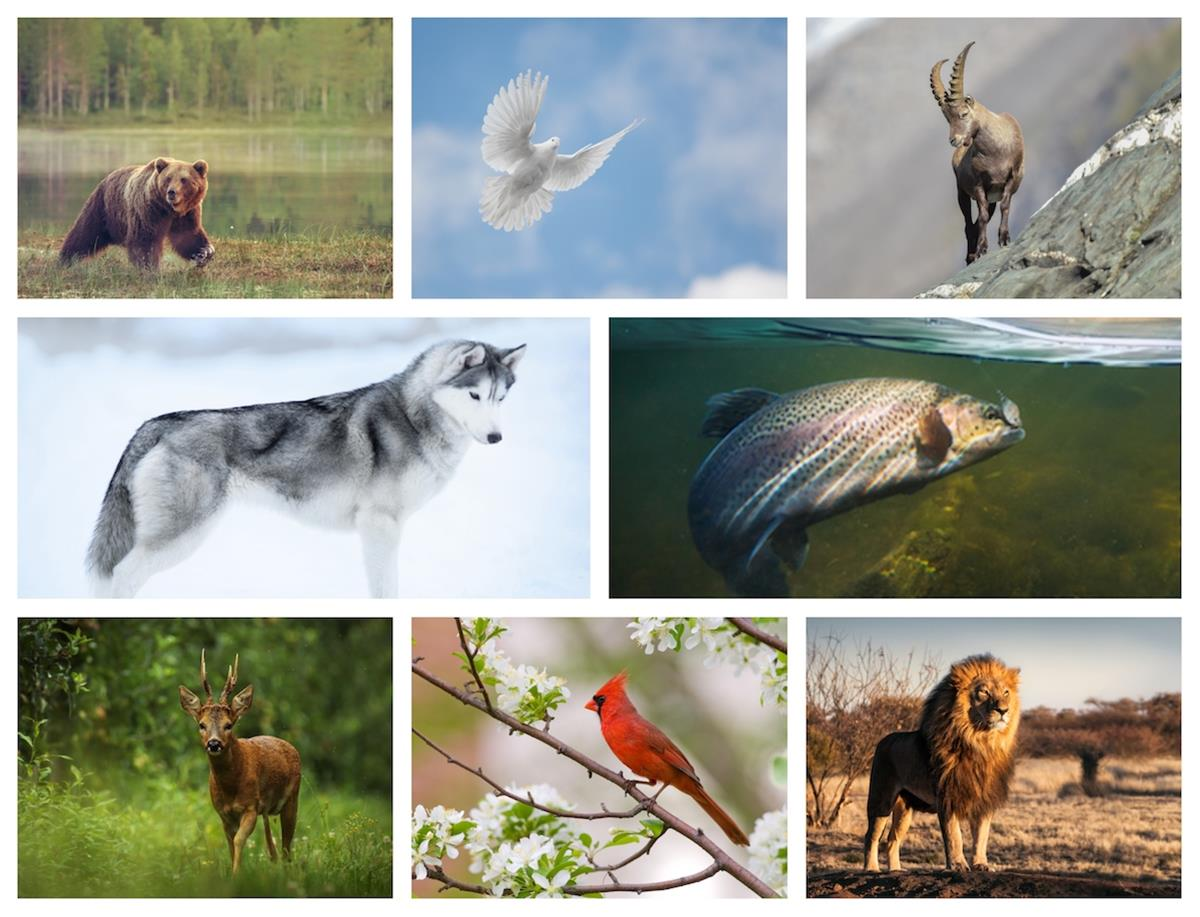 12 Jewish Given Names From the Animal Kingdom - Lifecycle Events