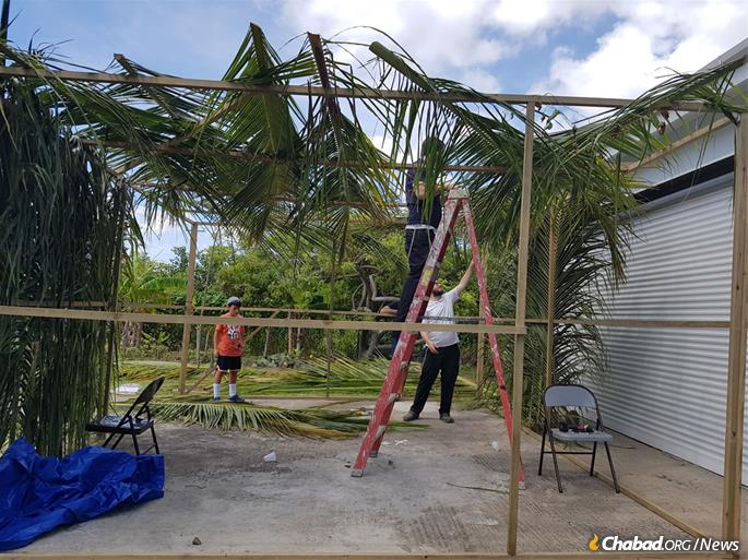 Sechach, the covering for the roof of a sukkah, is easy to find on a tropical island.