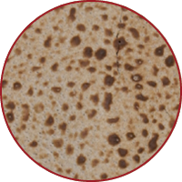 Complimentary Shmurah Matzah