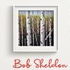 Art Opening: Bob Sheldon - Colors of Nature